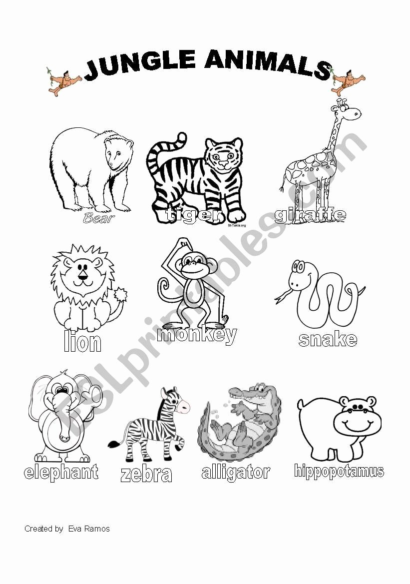 Jungle Animals Worksheets for Preschoolers Best Of Jungle Animals Worksheet 1 Esl Worksheet by Evaramos