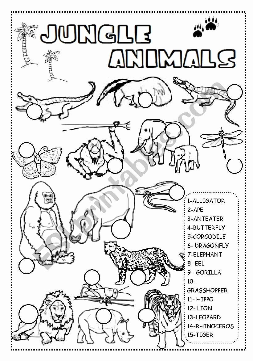 Jungle Animals Worksheets for Preschoolers Lovely Jungle Animals Worksheet Esl Worksheet by Ineta