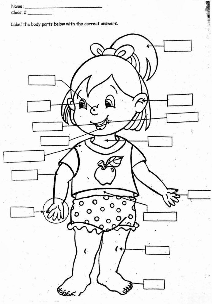 My Body Worksheets for Preschoolers Beautiful My Body Coloring Preschool Human for Kindergarten Times