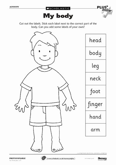My Body Worksheets for Preschoolers Beautiful Pin On Preschool theme Body Parts