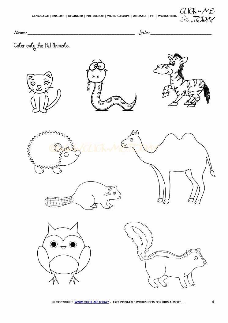 Pet Animals Worksheets for Preschoolers Lovely Pet Animals Worksheet Activity Sheet 4