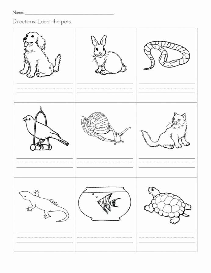 Pet Worksheets for Preschoolers New Free Printable Pet Worksheets Pets for Preschool