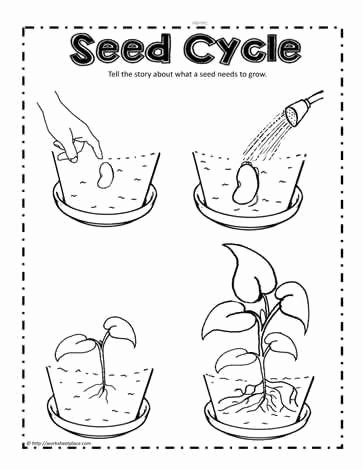 Plant Worksheets for Preschoolers Awesome Parts Of A Plant Worksheetsworksheets
