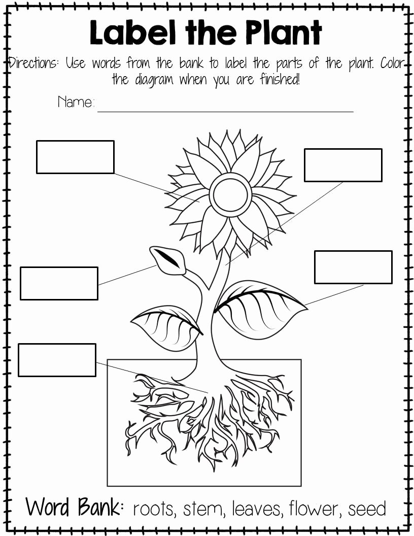 Plant Worksheets for Preschoolers Awesome Plant Labeling Worksheet Free
