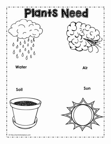 Plants Worksheets for Preschoolers Awesome Parts Of A Plant Worksheets