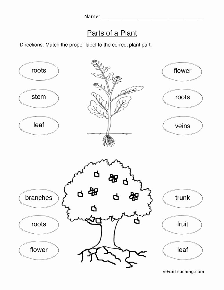 Plants Worksheets for Preschoolers Awesome Plant Parts Worksheet