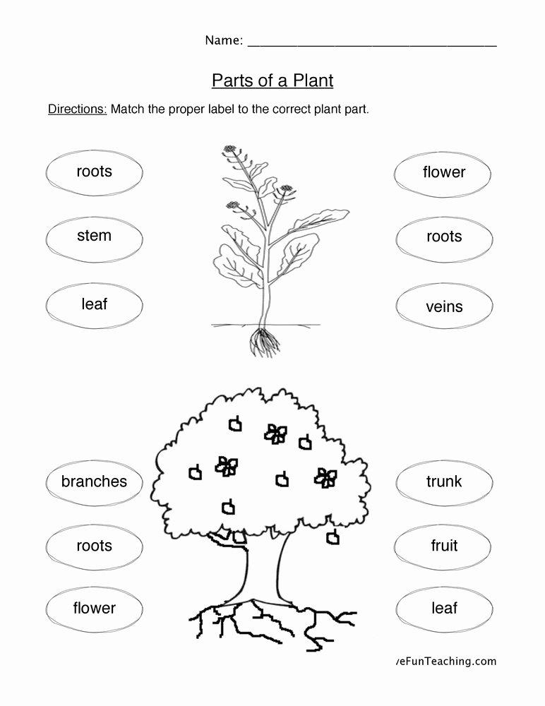 Plants Worksheets for Preschoolers Awesome Plant Parts Worksheet