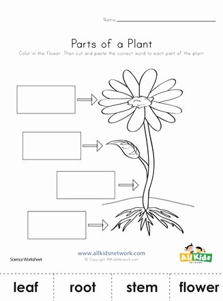 Plants Worksheets for Preschoolers Best Of Parts Of A Plant Cut and Paste