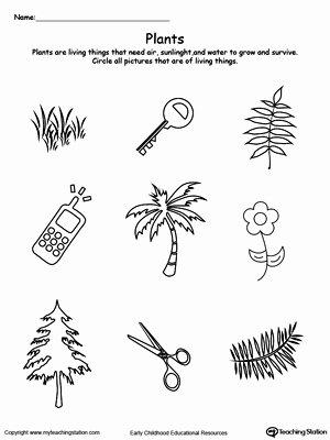 Plants Worksheets for Preschoolers Best Of Preschool Plants and Animals Printable Worksheets