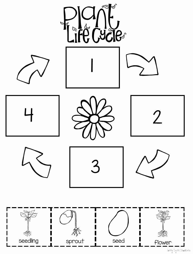 Plants Worksheets for Preschoolers Fresh Preschool Level Plant Life Cycle Worksheet