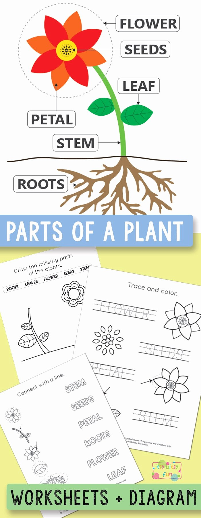 Plants Worksheets for Preschoolers New Free Printable Parts Of A Plant Worksheets Itsybitsyfun