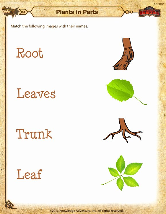 Plants Worksheets for Preschoolers top Plants In Parts Worksheet Kindergarten Science Printable sod