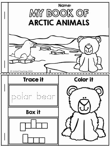 Polar Animal Worksheets for Preschoolers Lovely Polar Animals No Prep Activities