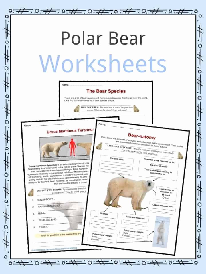 Polar Bear Worksheets for Preschoolers Fresh Polar Bear Facts Worksheets Habitat & Species Information