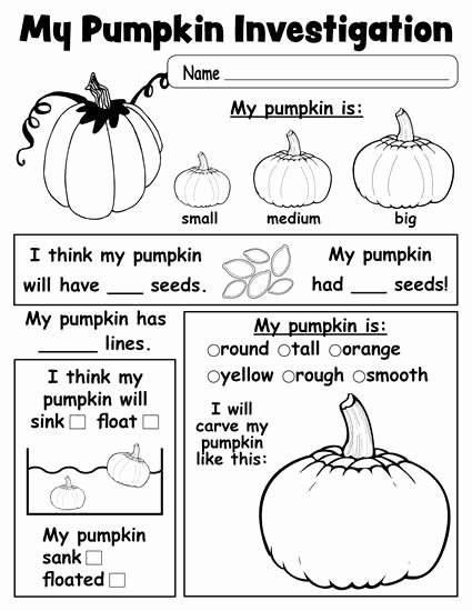 Pumpkin Math Worksheets for Preschoolers Awesome Pumpkin Investigation Worksheet Printable Kindergarten
