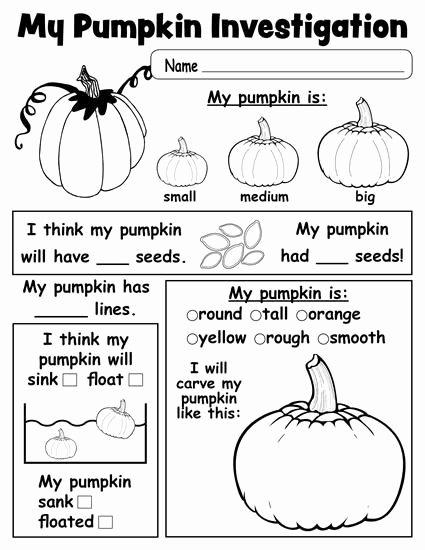 Pumpkin Math Worksheets for Preschoolers Awesome Pumpkin Investigation Worksheet Printable Kindergarten