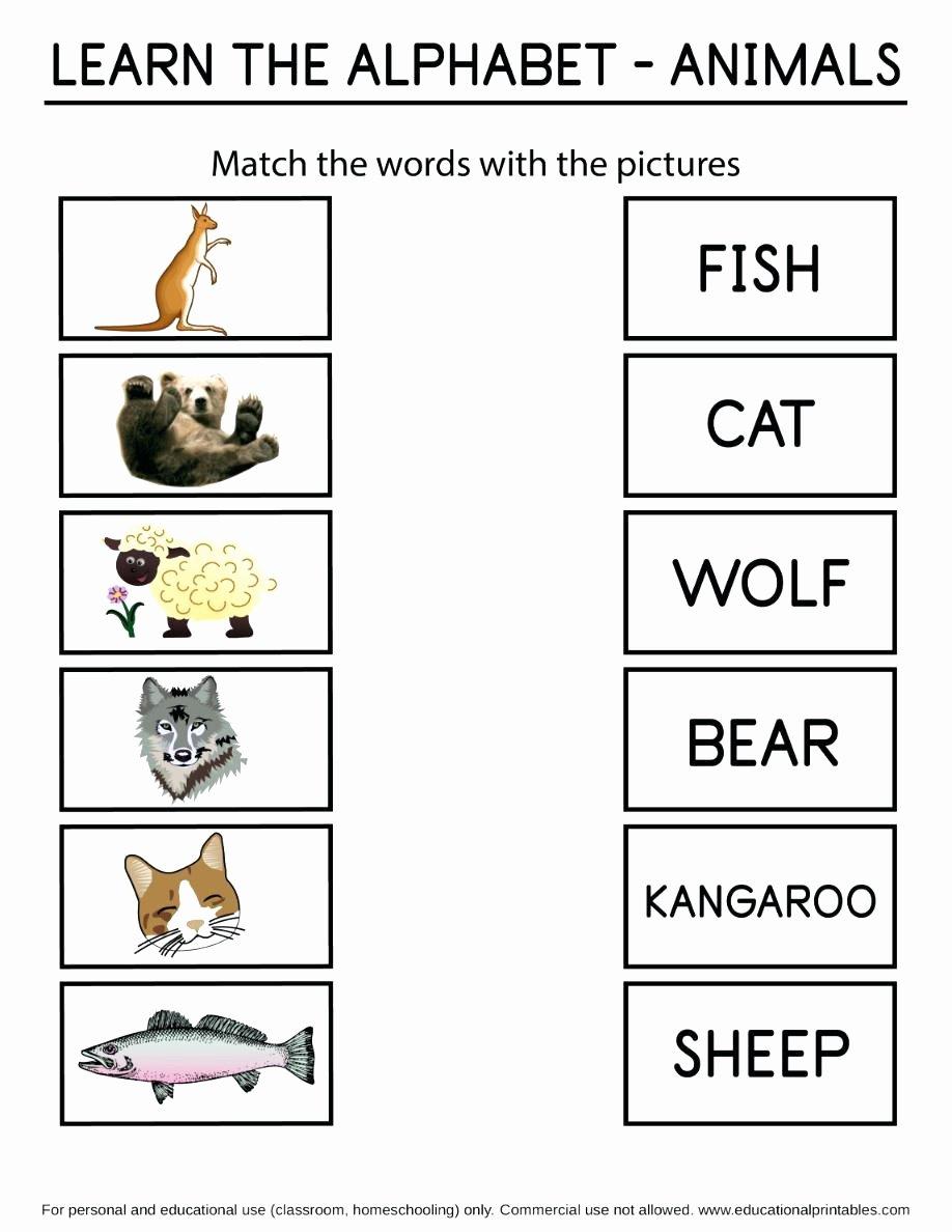 Readiness Worksheets for Preschoolers Beautiful Math Worksheet 62 Extraordinary Kindergarten Readiness