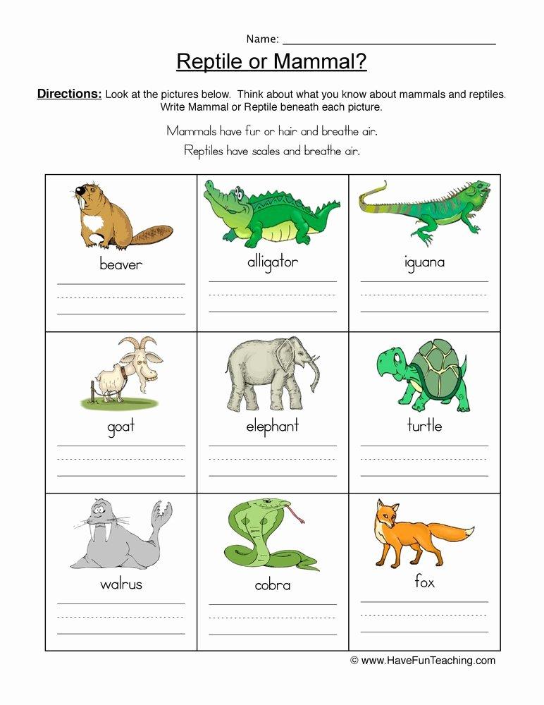 Reptile Worksheets for Preschoolers Inspirational Mammal Vs Reptile Worksheet