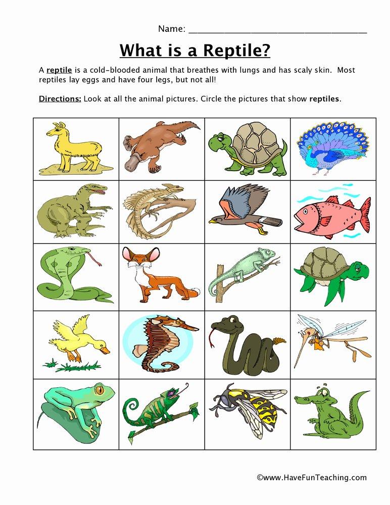 Reptile Worksheets for Preschoolers New Reptile Classification Worksheet
