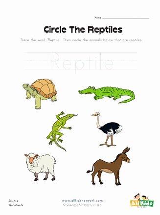Reptile Worksheets for Preschoolers top Circle the Reptiles Worksheet