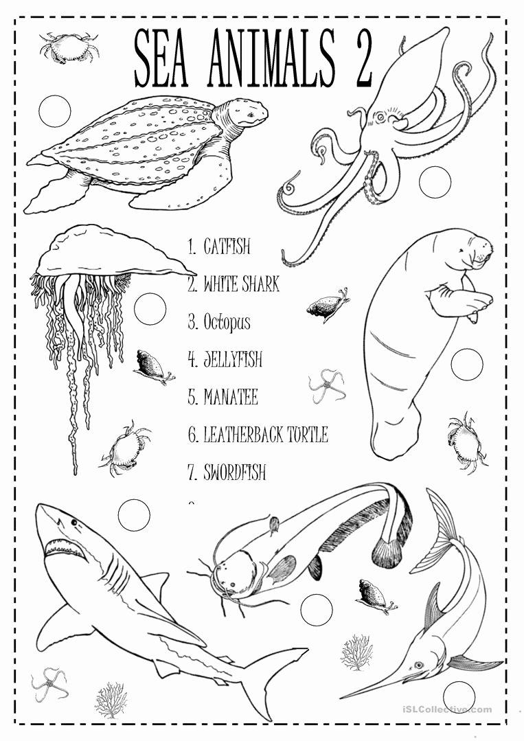 Sea Animals Worksheets for Preschoolers Beautiful English Esl Sea Animals Worksheets Most Ed 86
