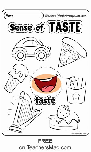 Sense Of Smell Worksheets for Preschoolers Beautiful Free Five Senses Worksheets Teachersmag