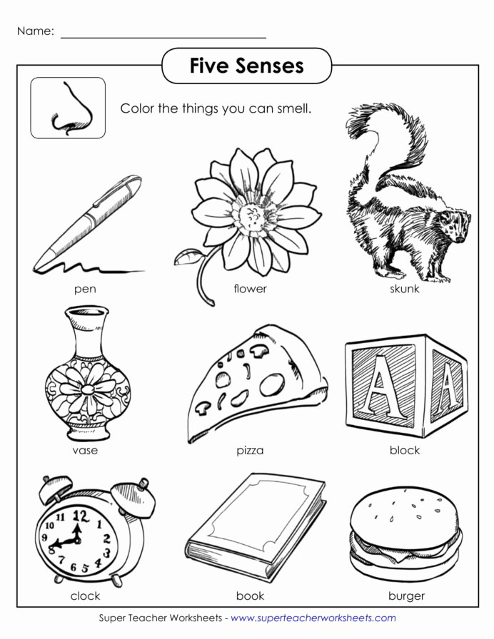 Sense Of Smell Worksheets for Preschoolers Best Of Worksheet Senses Printable Worksheets and 5 Worksheets
