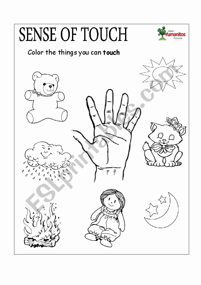 Sense Of Smell Worksheets for Preschoolers Fresh Sense Of touch and Smell Esl Worksheet by Yina