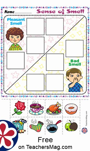 Sense Of Smell Worksheets for Preschoolers Inspirational Free Worksheets About the 5 Senses for Preschoolers