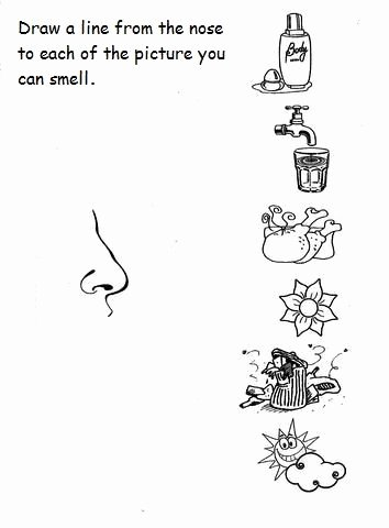 Sense Of Smell Worksheets for Preschoolers New Free 5 Senses Worksheet for Kids