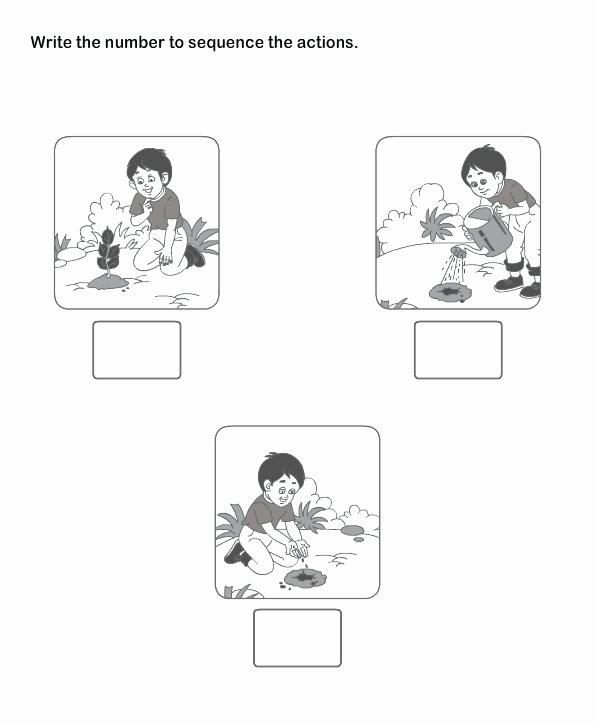Sequencing Worksheets for Preschoolers Beautiful Worksheet Worksheet Sequencing Worksheets for Preschool