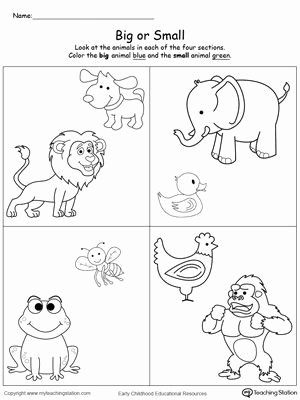 Size Comparison Worksheets for Preschoolers Beautiful Paring Animals Sizes Big and Small