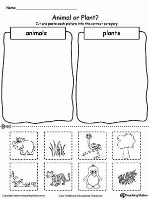 Sorting Worksheets for Preschoolers Beautiful Animal and Plant sorting