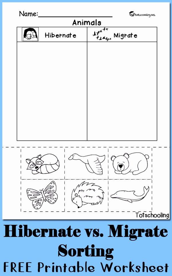 Sorting Worksheets for Preschoolers Unique Hibernation Vs Migration Animal sorting Worksheet