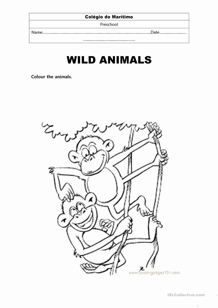 Wild Animal Worksheets for Preschoolers top Wild Animals English Esl Worksheets for Distance Learning