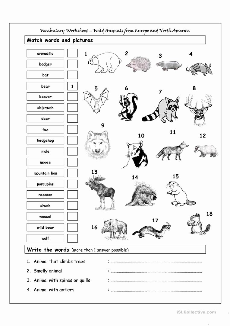 Wild Animal Worksheets for Preschoolers Unique Vocabulary Matching Worksheet Wild Animals From Europe north